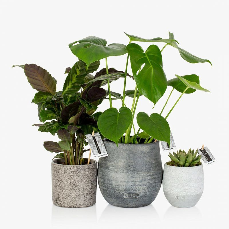 Set of 3 house plants