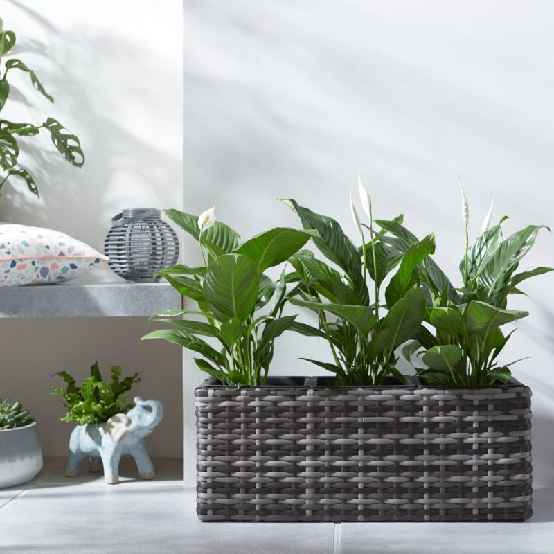 Rattan planter