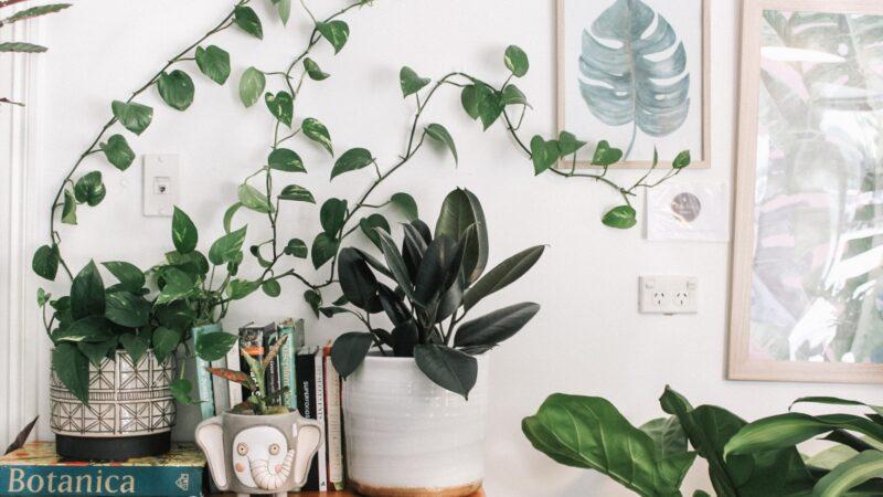 Green leaf plants and matching decor