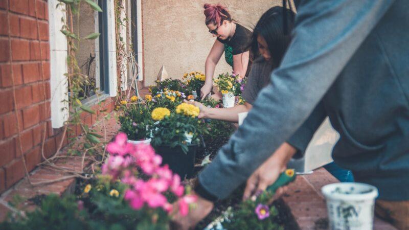 Planting window boxes